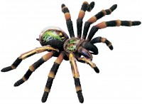 3D пазл 4D Master Tarantula Spider Anatomy Model 26112
