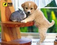 Коврик для мышки Pod myshku Puppy