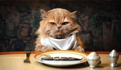 Гид любителя кошек — подходящий лучший корм
