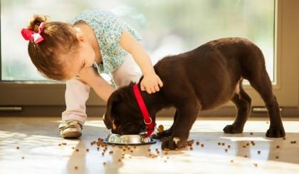 Полезный обед для домашнего любимца: ТОП-5 сухих кормов премиум-класса для щенков