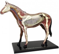 3D пазл 4D Master Horse Anatomy Model 26101