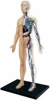 3D пазл 4D Master Half Cleared Human Body Anatomy Model 26085