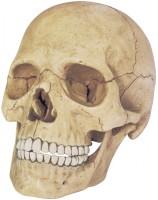 3D пазл 4D Master Exploded Skull Model 26086