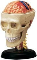 Фото - 3D пазл 4D Master Cranial Nerve Skull 26053