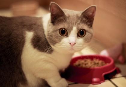 Сухие корма для кошек: здоровое питание вашего питомца
